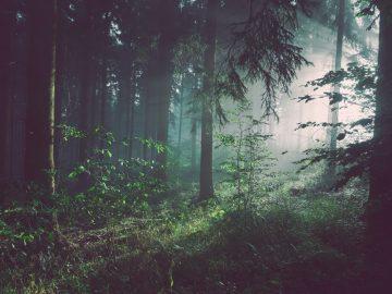Las plantas se están extinguiendo en cantidades tan altas mucho peor que los animales