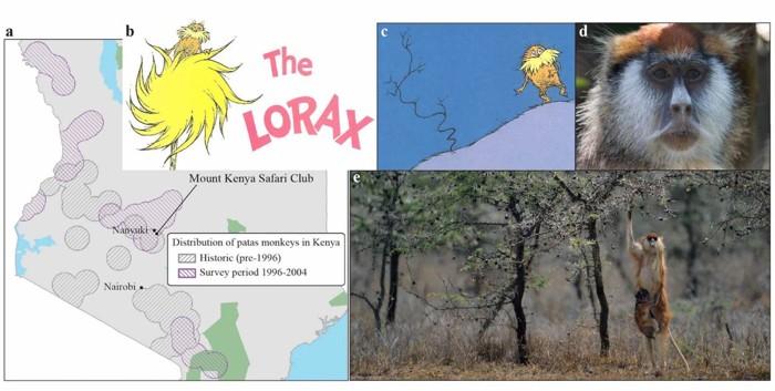 En su viaje a Kenia, Theodor «Dr. Seuss» Geisel probablemente vio al mono de la imagen en árboles de acacia. Observe cómo el tenue árbol (figura c) se parece a una acacia silbante de la vida real (figura e)