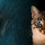 Los gatos actúan como un escudo protector contra energías negativas