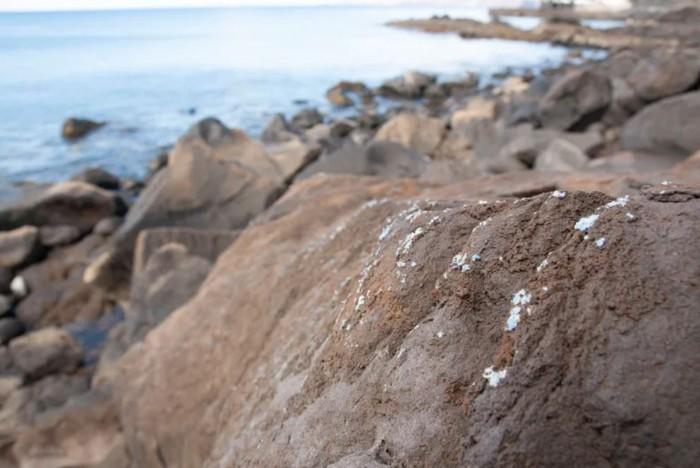 Plasticrust es una forma de contaminación plástica que aún no se ha visto antes en las costas de la Tierra