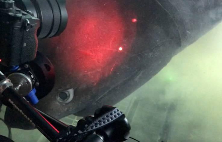 En la última inmersión de la expedición, el equipo que estaba dentro del sumergible Nadir de OceanX se encontró con varios tiburones de punta cerrada, incluida esta gran hembra que se detuvo para mirar a través de los cristales a los investigadores