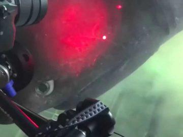 Científicos graban un antiguo tiburón de 6 metros y de aguas profundas en Florida