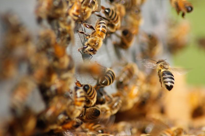 Investigadores temen que un apocalipsis de insectos ocurra pronto