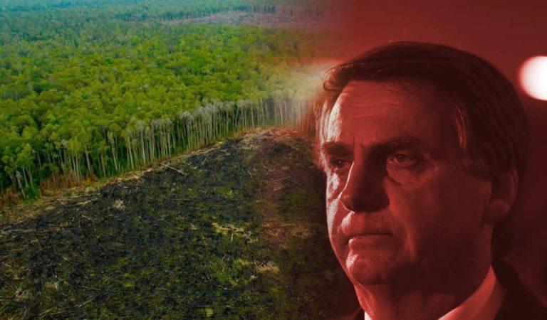 Deforestación ilegal en Brasil está llevando a la selva amazónica a un punto de inflexión, advierte experto
