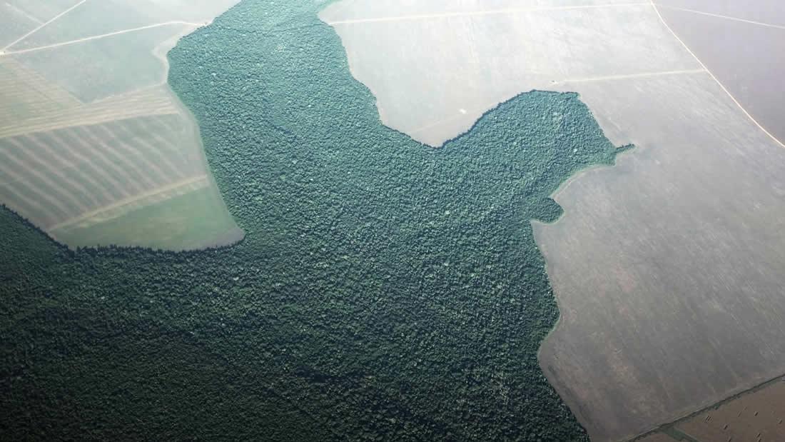 Selva amazónica convertida en tierra de cultivo. Un área del tamaño del Gran Londres se ha perdido este mes