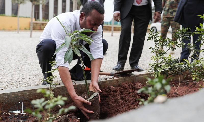 El primer ministro, Abiy Ahmed, planta un árbol en Addis Abeba