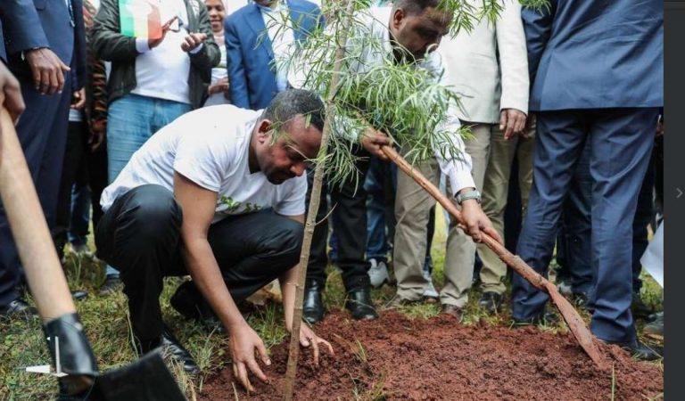Etiopía planta 353 millones de árboles en un día para ayudar a enfrentar la crisis climática