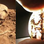Hallan restos de un guerrero de 2.000 años que falleció por una cirugía cerebral fallida
