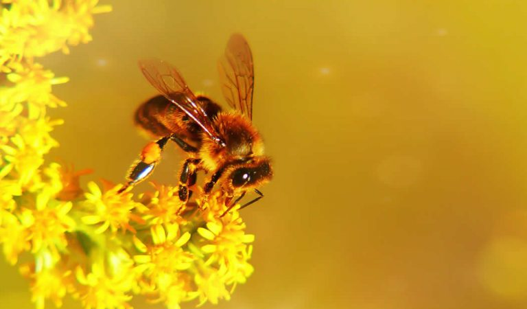 Investigadores confirman que un apocalipsis de insectos ocurrirá pronto