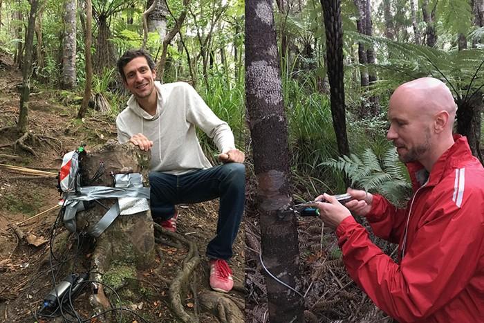 Sebastian Leuzinger y Martin Bader investigan con árboles Kauri