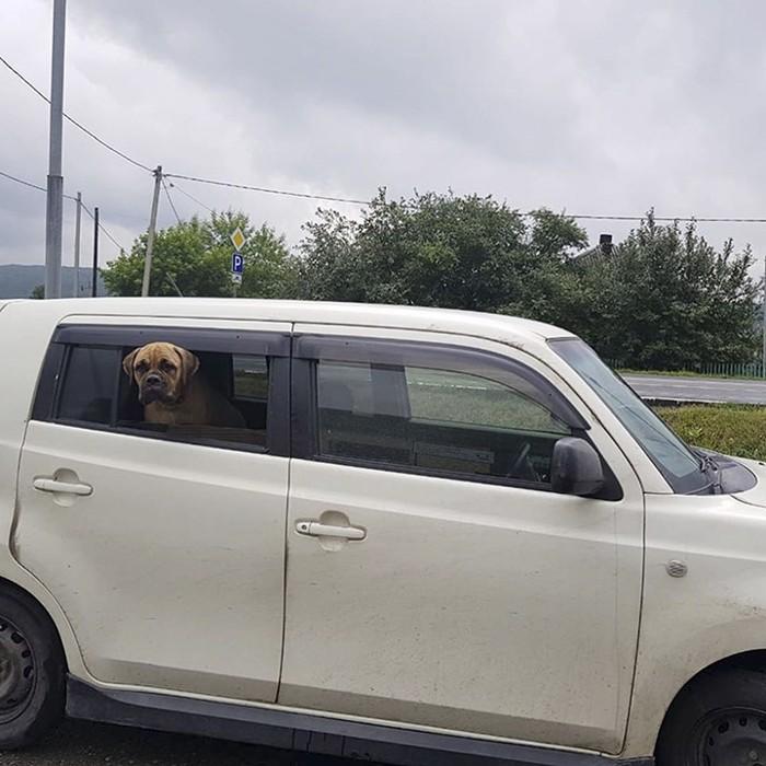 Perro camina 200 km a través del bosque de Rusia para buscar a sus dueños que la rechazaron