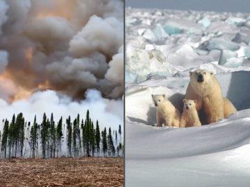 Ola de calor en Alaska sobrepasa los 32 grados celsius, la mayor registrada en su historia