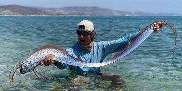Pez remo aparece en playa de México y dos turistas le salvan la vida