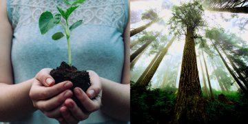Plantar más de 1 billón de árboles podría salvar el planeta del cambio climático, propone científico