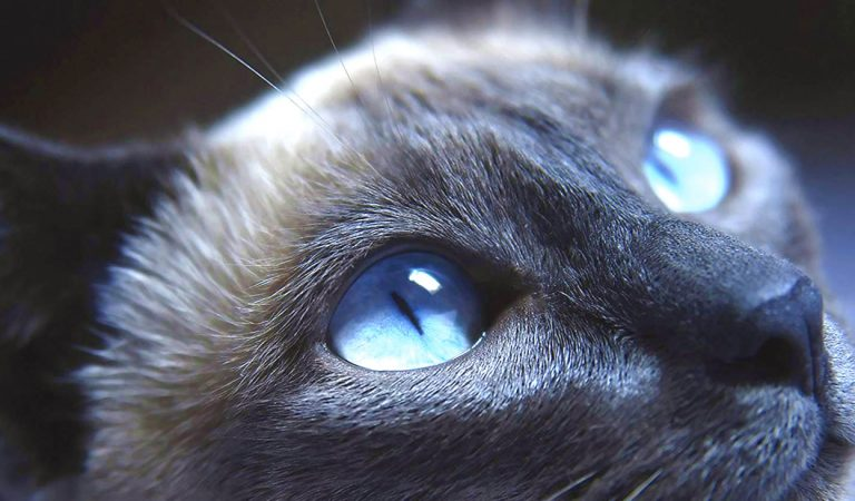 ¿Tienen los animales un sexto sentido?