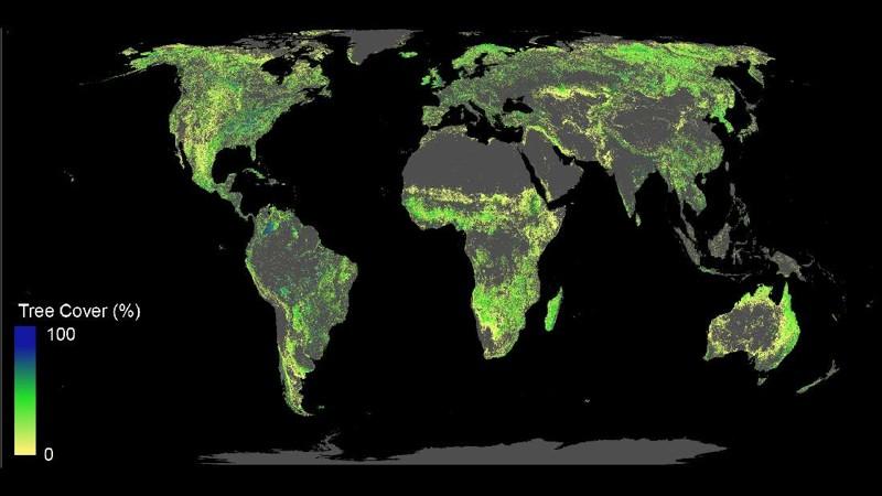 Esta es la tierra disponible para la restauración de bosques (excluyendo desiertos, áreas agrícolas y urbanas; no se muestran las tierras forestales actuales)