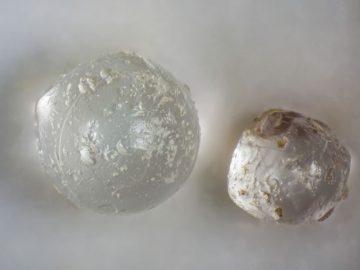 Un antiguo meteorito golpeó la Tierra y estas perlas en almejas fósiles son la evidencia