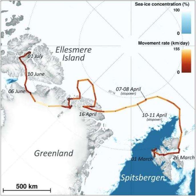 Un mapa que muestra el viaje del zorro ártico del 1 de marzo al 1 de julio de 2018