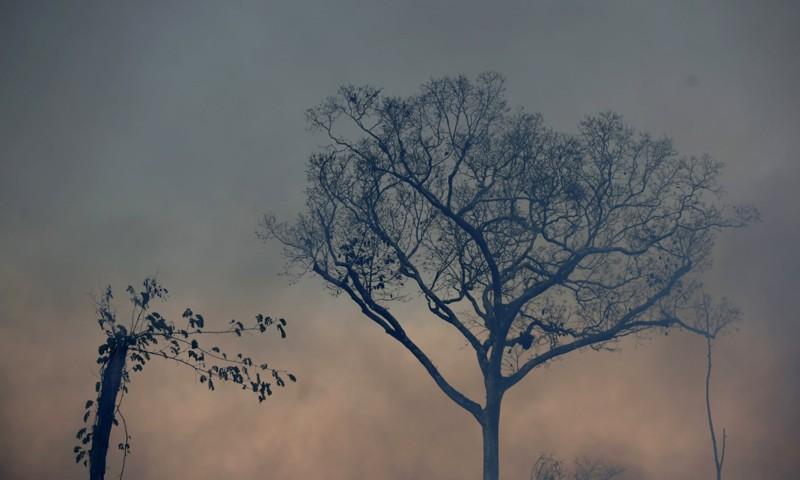 Un árbol se encuentra en medio del humo de un incendio a lo largo del camino hacia el bosque nacional Jacunda, en la región de Vila Nova Samuel, en la Amazonía brasileña