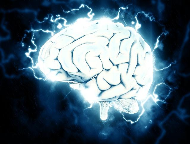 Científicos cultivaron pequeños cerebros humanos y los colocaron a los robots