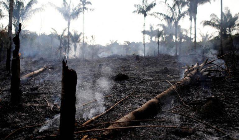 Advierten que colapso de la Amazonía podría ser una «bomba del fin del mundo»