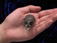 Cráneo de 20 millones de años hallado podría ayudarnos a entender cómo funciona el cerebro