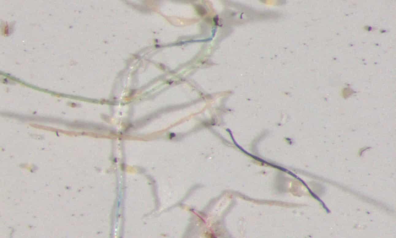 Las muestras de agua de lluvia recolectadas en Colorado y analizadas bajo un microscopio contenían un arco iris de fibras plásticas