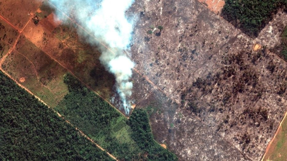 Se pierden aproximadamente tres campos de fútbol por minuto en la Amazonía