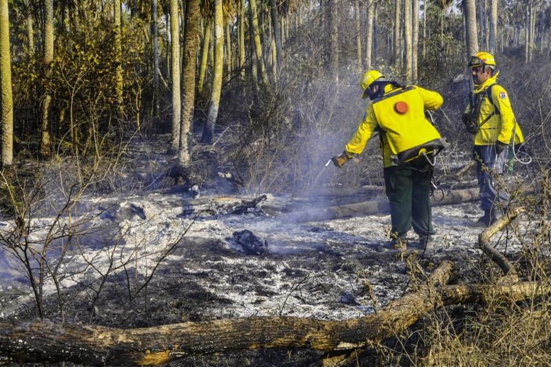 Bomberos trabajan en la Reserva Ecológica Tres Gigantes. Foto: Secretaría de Emergencia Nacional