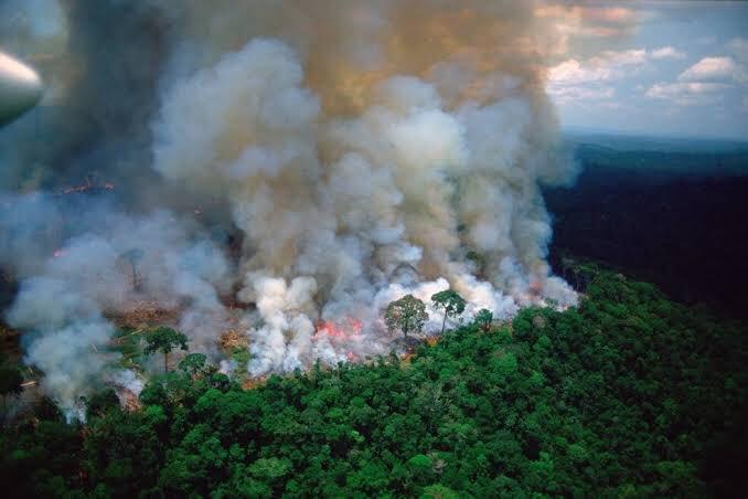 La Amazonía está en llamas y el gobierno de Brasil sigue alentando a la deforestación de dichas tierras
