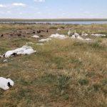 Más de 11.000 pájaros caen muertos del cielo en Montana