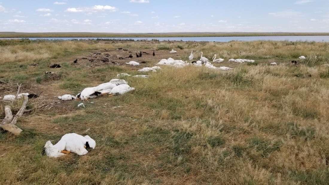 Más de 11.000 pájaros caen muertos del cielo en Montana, EE.UU.