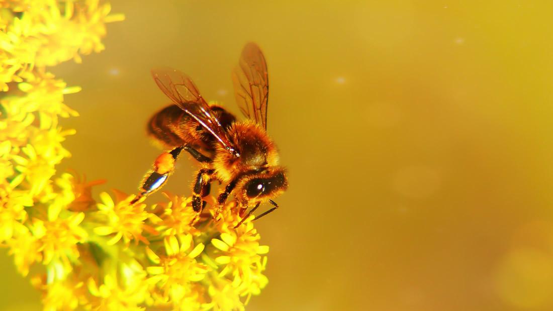 Medio billón de abejas han muerto en Brasil