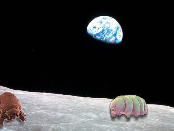 Miles de tardígrados «indestructibles» podrían estar viviendo en la Luna