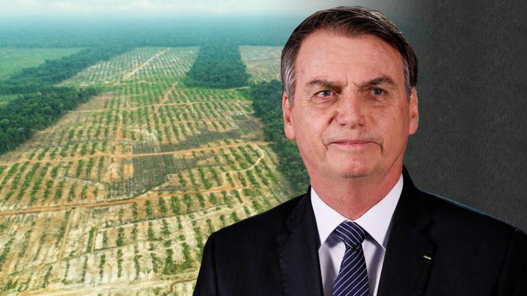 Noruega bloquea ayuda a Brasil por no detener la deforestación de la Amazonía