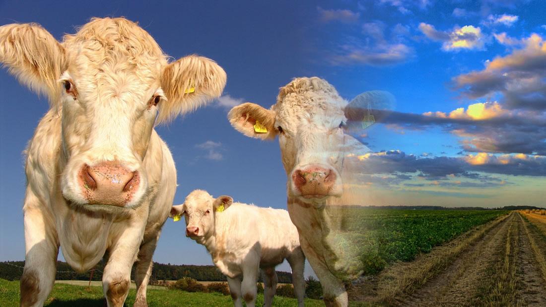Tenemos que cambiar la producción de alimentos para salvar el planeta, dice un informe
