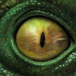Abducción Reptil: el terrorífico caso vivido por un testigo