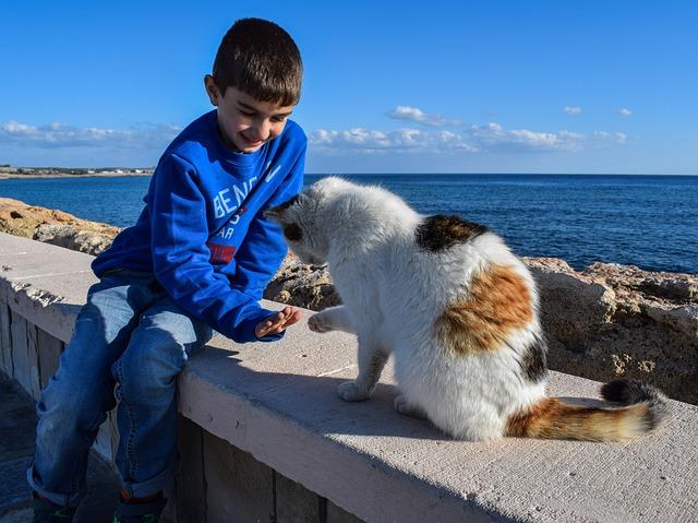 Gatos desarrollan apego a sus cuidadores humanos al igual que los niños y perros