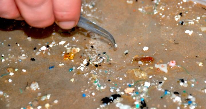 Muestra de microplásticos sacados del mar