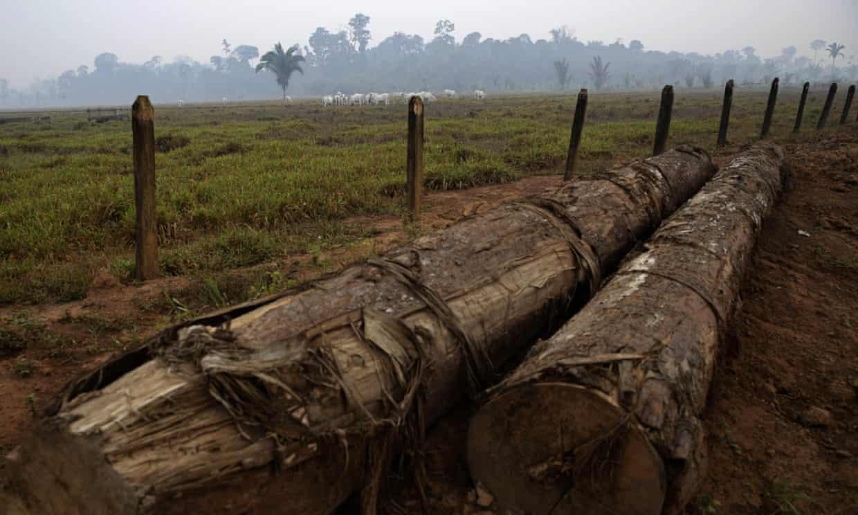 Registros a lo largo del camino hacia el bosque nacional Jacunda, cerca de la ciudad de Porto Velho en la Amazonía brasileña