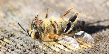 Apocalipsis de insectos: revelan hallazgos alarmantes sobre la disminución de insectos