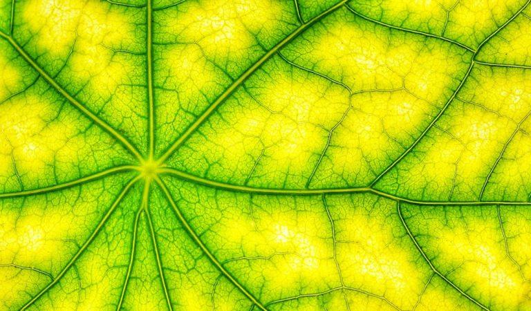 Científicos crean hoja artificial que usa luz solar para producir combustible sintético limpio