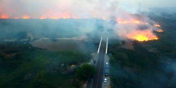 Graves incendios de «proporciones nunca registradas» destruyen el Pantanal en Brasil