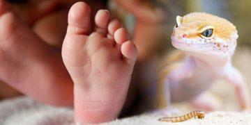 Hallan antiguos músculos de reptil en embriones humanos