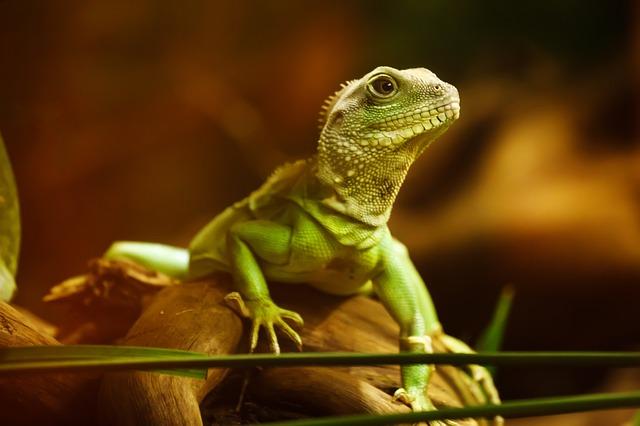 Hallan antiguos músculos de reptil en «mano» de embriones humanos