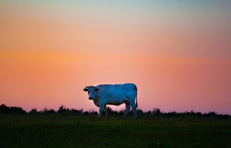 Este caso presentaba varias similitudes con los de mutilaciones de ganado