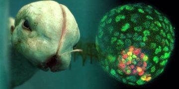 Crean un embrión sintético sin usar espermatozoides ni óvulos ¿una nueva forma de vida que sustituirá al humano?
