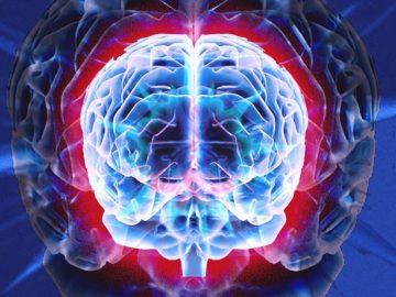 El cerebro se reconecta a sí mismo si se elimina la mitad, descubre investigación