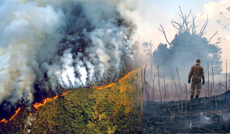 «El sufrimiento humano será incalculable» 11.000 científicos declaran emergencia climática global