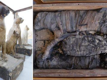 Hallan momias de leones, grandes felinos y gatos juntas por primera vez en Egipto